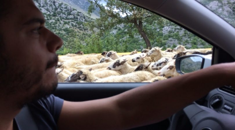 2-Mostar-koyunlar.JPG