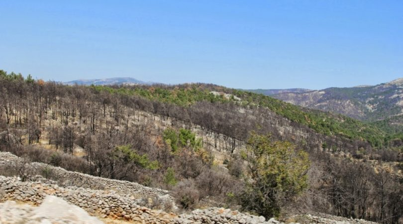 chios-forest-fire.JPG