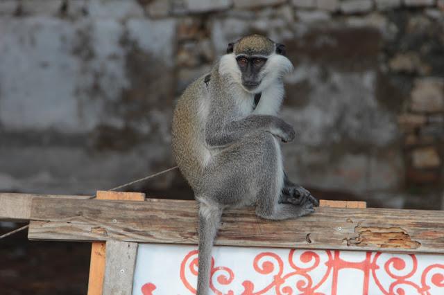karina-maymun.JPG