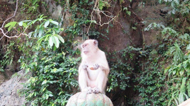 kuala_lumpur_travel_tips-(10).JPG