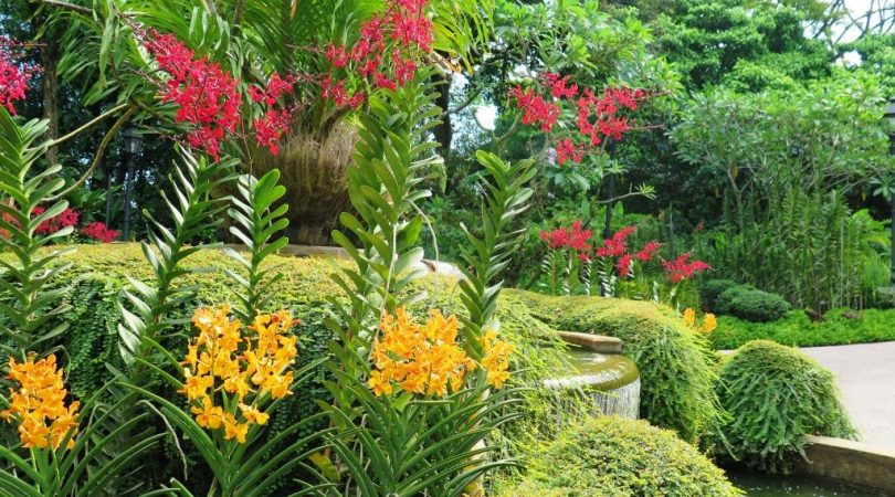 national_orchides_garden-(3).JPG