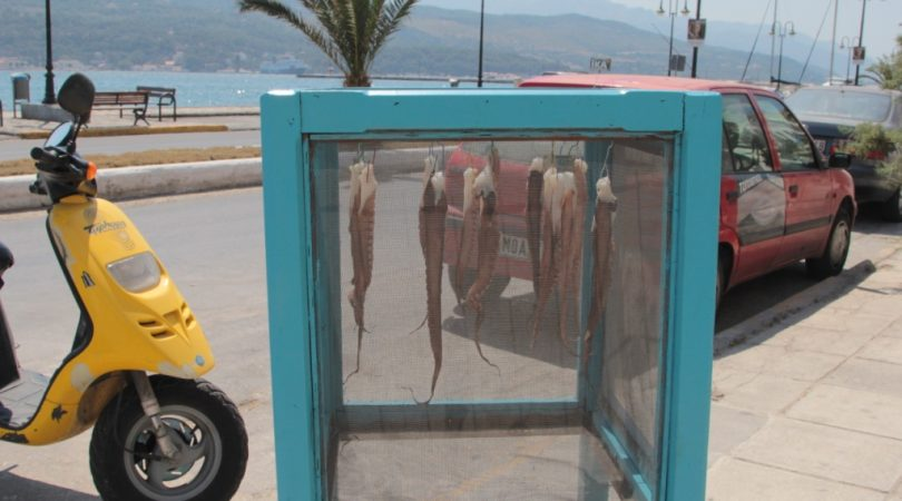 octopus-drying.JPG