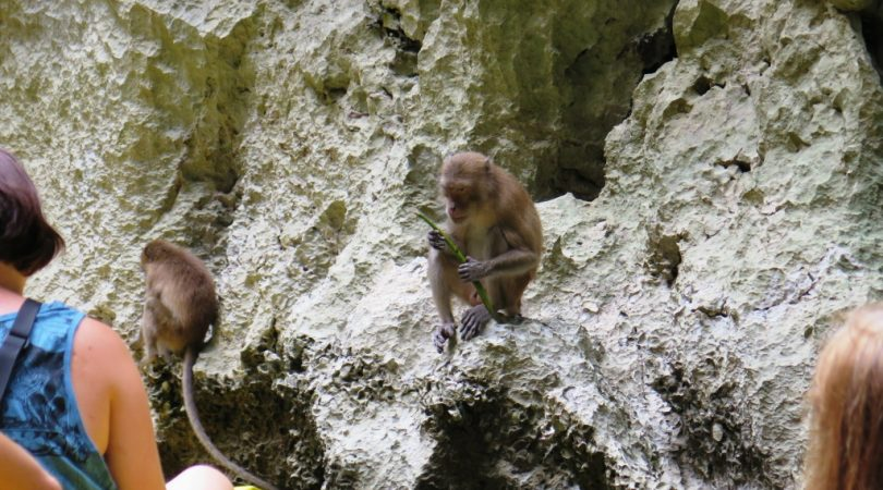phang-nga-bay-monkeys.JPG