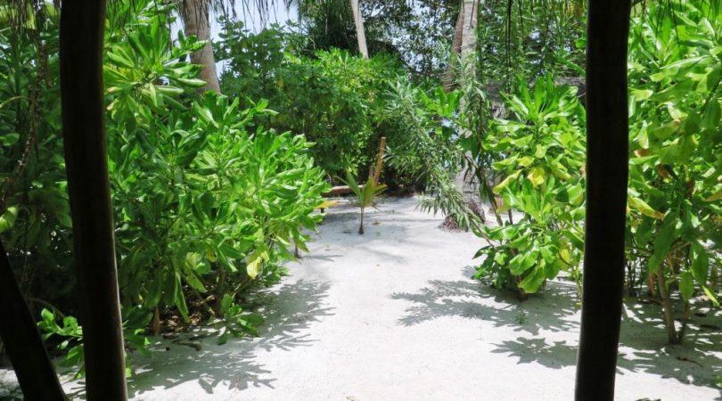 maldives (67)