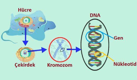 Dna-Genetik-Kod-34